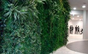 Озеленение интерьера и экстерьера