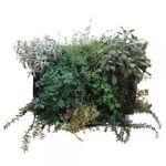 стабилизированная живая изгородь / листва / натуральная / для интерьера