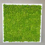 """стабилизированная """"зеленая стена"""" / из модульных панелей / натуральная / для интерьера"""