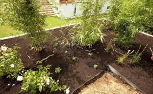 Растения и аксессуары