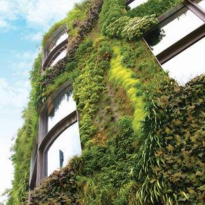 трельяж для зеленой стены