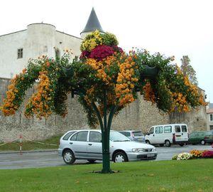 декоративное растение большого размера