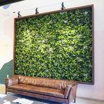 """синтетическая """"зеленая стена"""""""